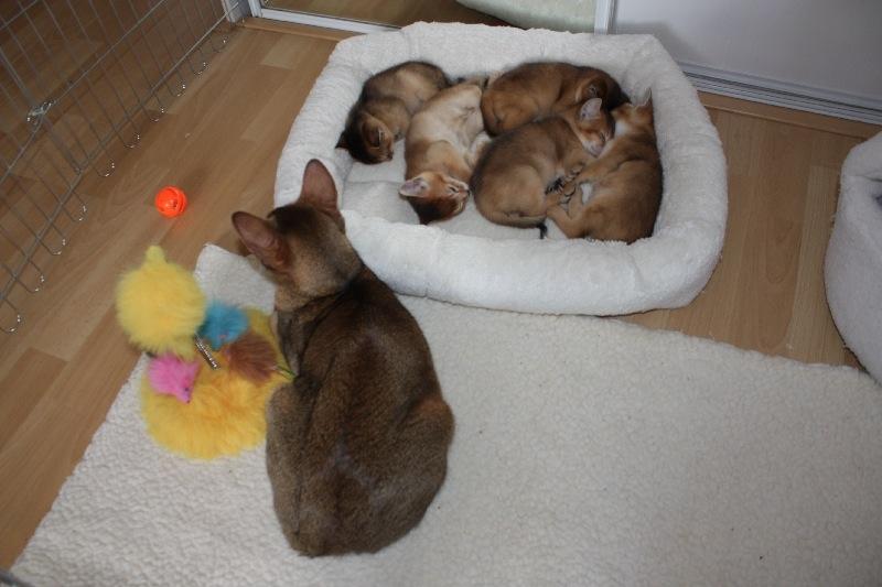 14-03-lekker-slapen-terwijl-mama-toekijkt-8043